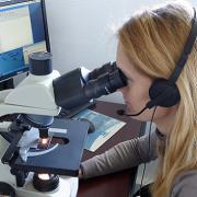 analyste comptant les pollens au microscope