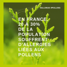 Les allergies aux pollens en France